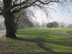 Victoria Park ws
