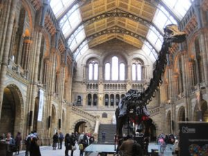 natural history museum 4 ws